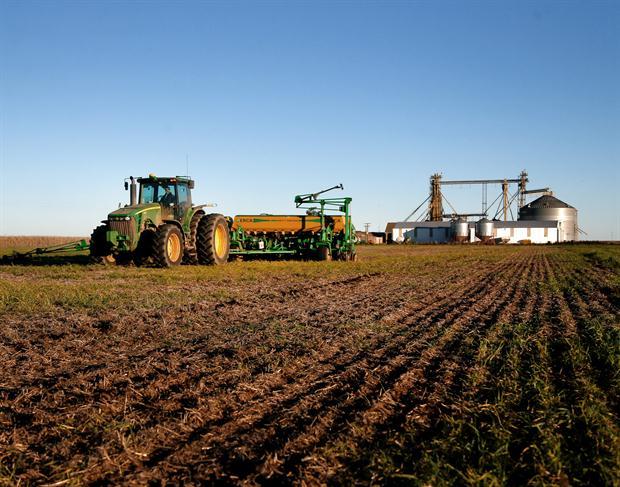 Resultado de imagen para crecimiento de las áreas del maíz y del trigo