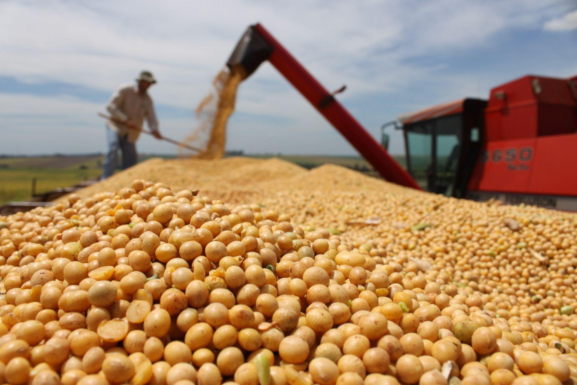 Resultado de imagen para bolsa de cereales exportacion