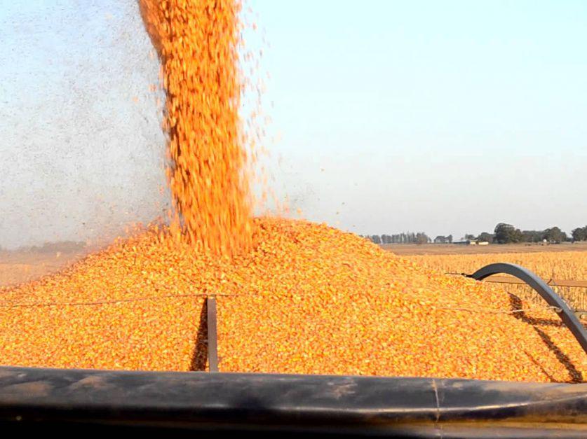 Brasil lidera las exportaciones de maíz - Revista Chacra
